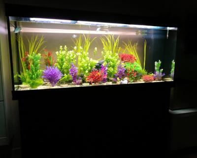 Duplex Wohnung mit a Zimmer und aquarium, Wohnung Antwerpen