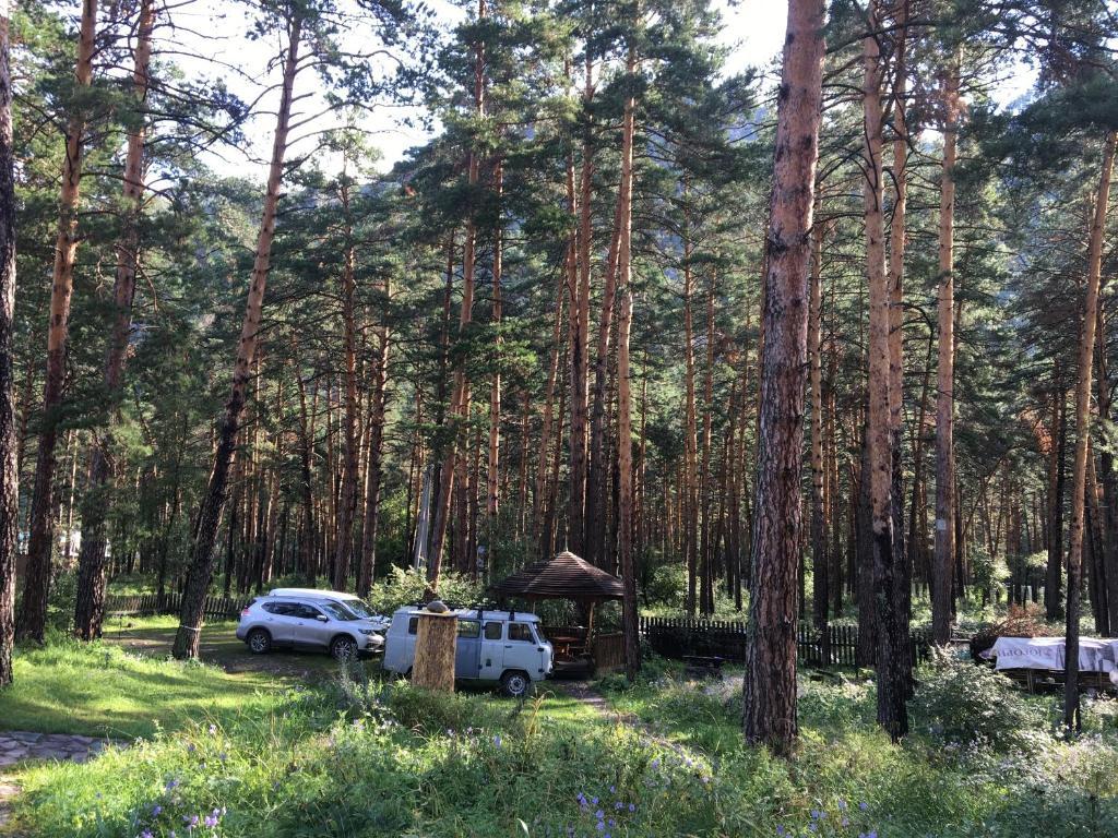 Matrimoniale in Briceni Moldova