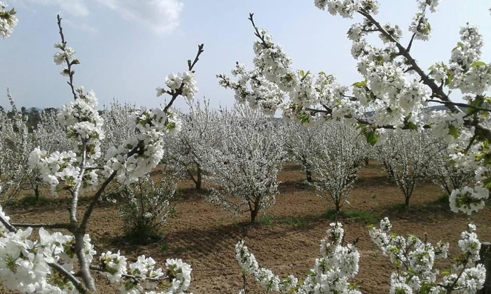 Il giardino dei ciliegi vermietungen cura nuova