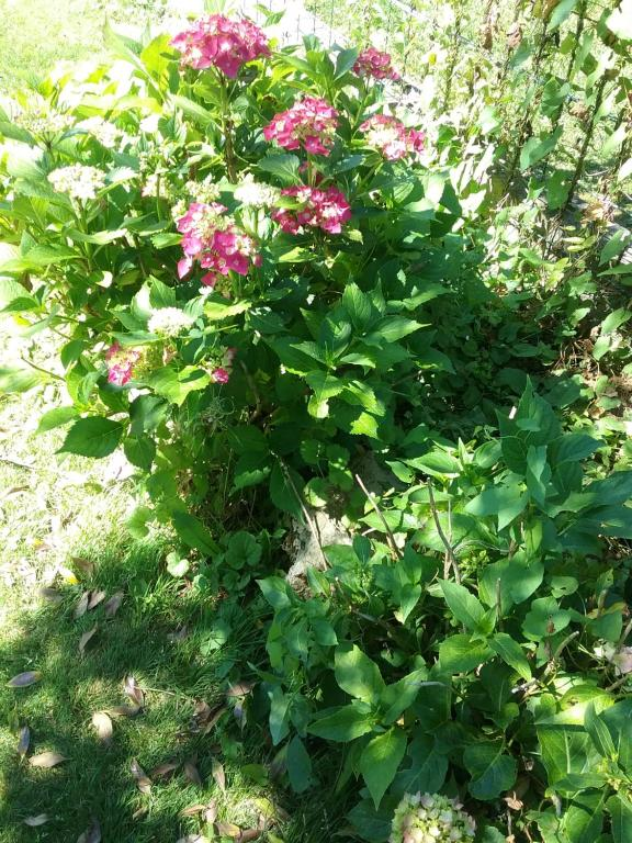 bb au jardin fleuri - Jardin Fleuri