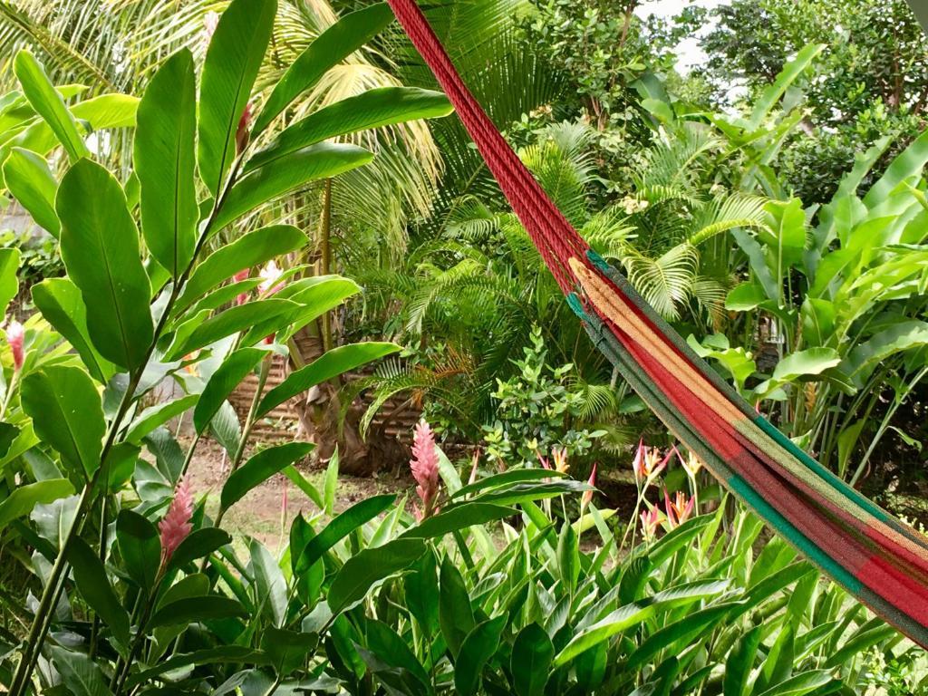 Un bungalow dans mon jardin fleuri, Vermietung Baie Mahault