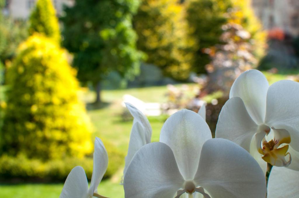 Il giardino segreto sport & relax ferienhaus garessio