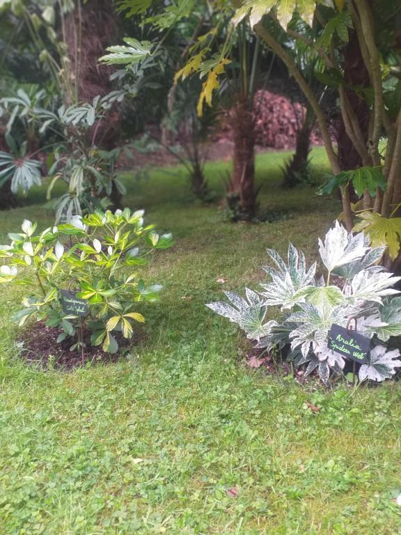 Un Jardin en Pente Douce, Vermietung Locquénolé