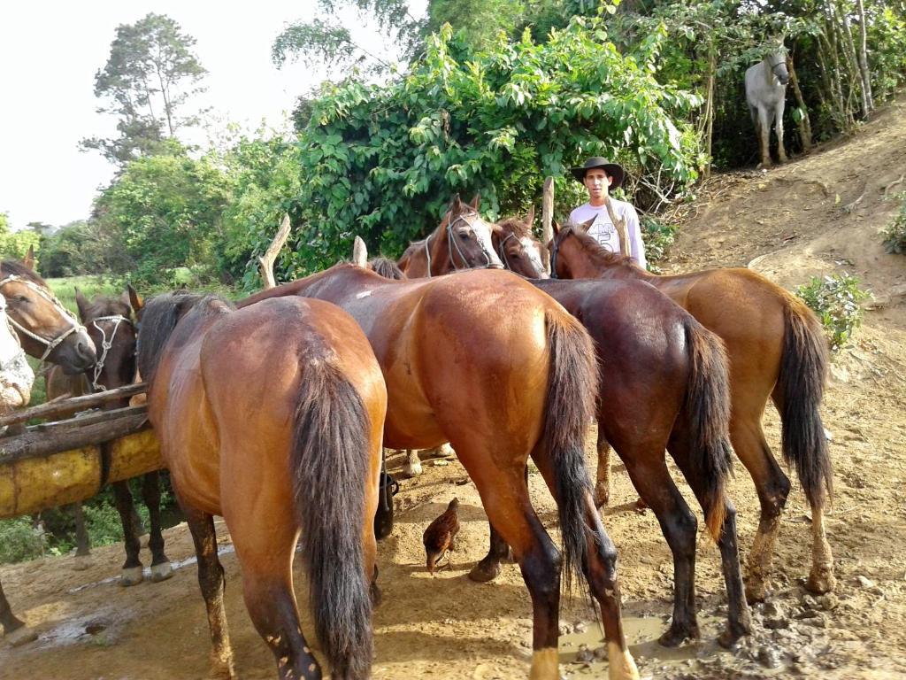 Casa Juanito Y Yunia Casa Rurale Viñales