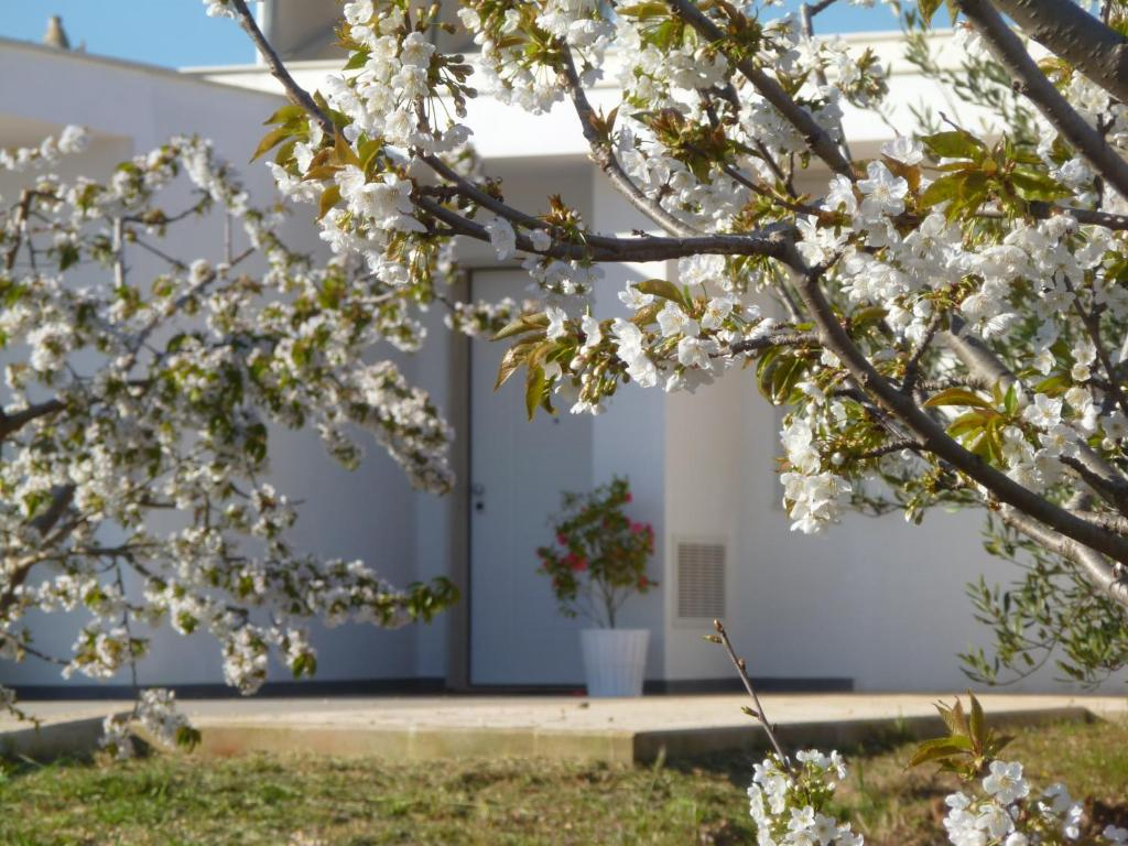 Il giardino dei ciliegi turi gästezimmer turi