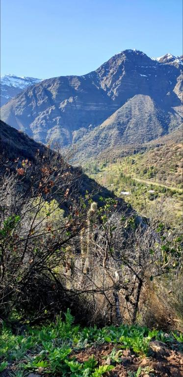 Cordillera Flora Endogena Bosque Esclerofilo Chalets San Jose De Maipo
