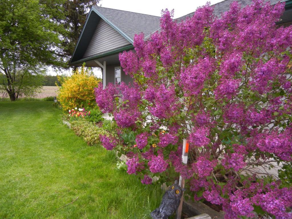 Duck Pond B Amp B Cottage R 233 Servation Gratuite Sur Viamichelin