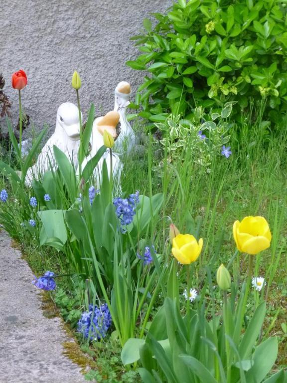 Jardin Fleuri, Gîte Lingolsheim