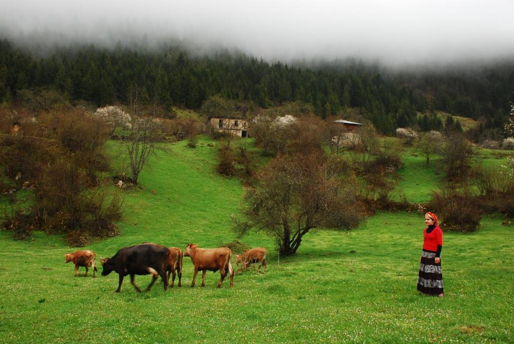 Yavuzkemal