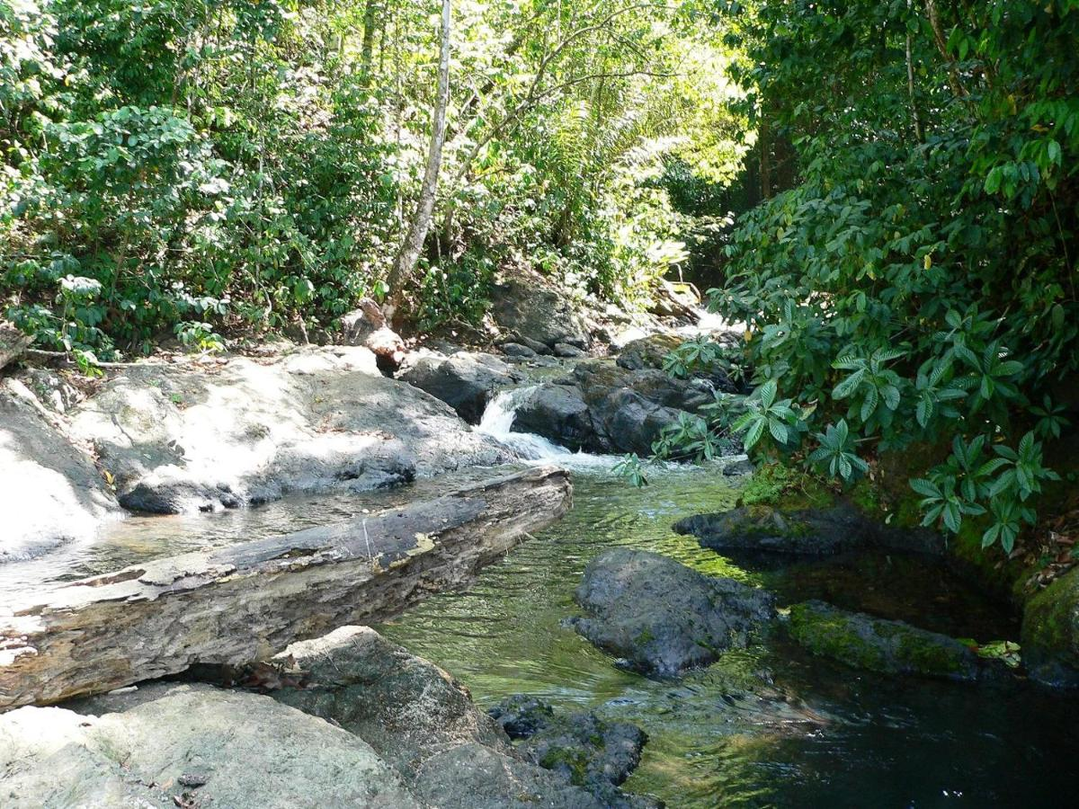 Hotel Casa Corcovado Jungle Lodge-photo32