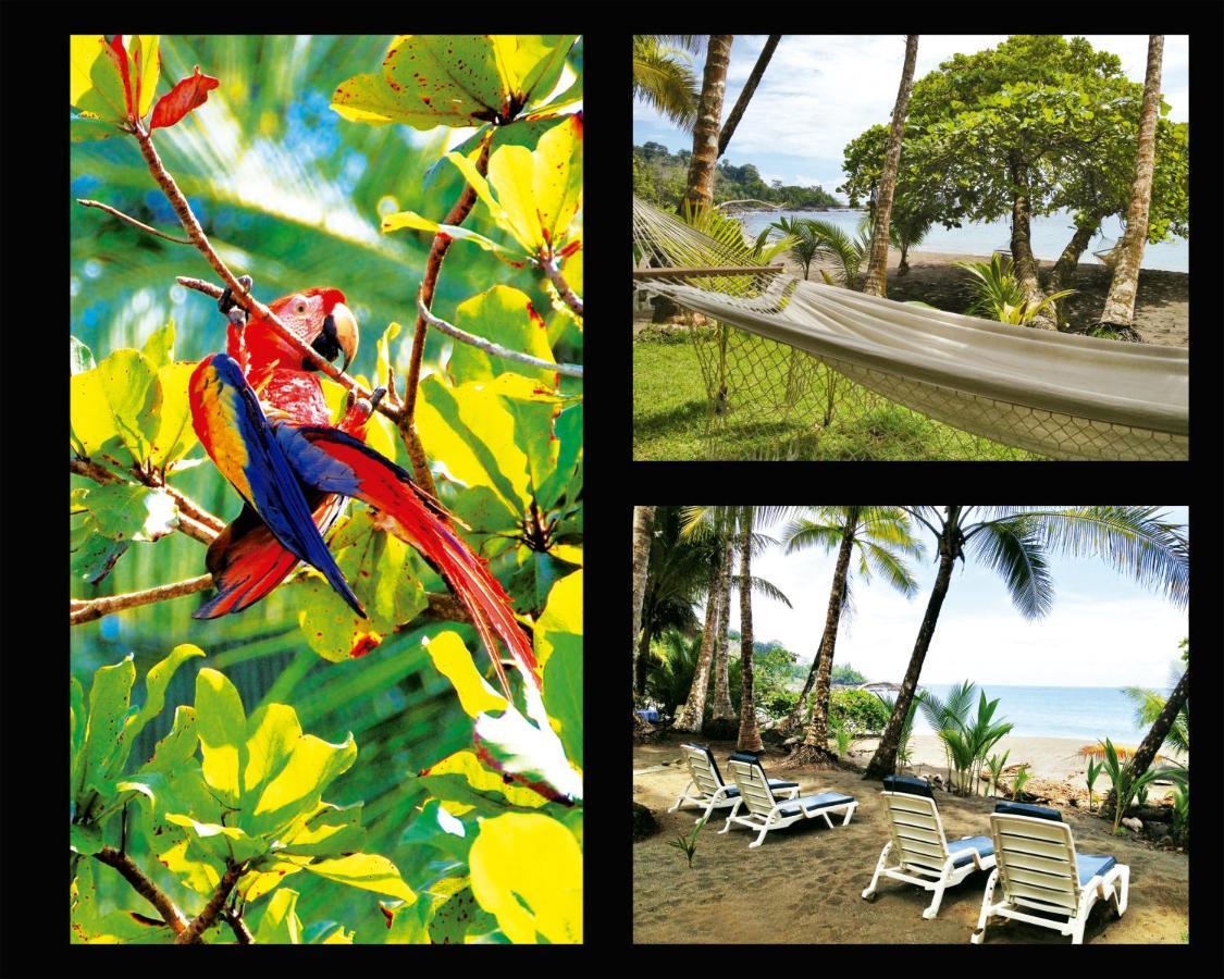 Hotel Casa Corcovado Jungle Lodge-photo29