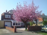 Cherry Blossom Guest House