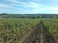 Agriturismo da Remo, Bauernhöfe - Magliano in Toscana