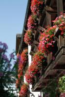 Hotel Neuer am See, Hotels - Prien am Chiemsee