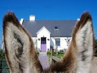 Clondanagh Cottage and Farm-on-the-Lake, Venkovské domy - Tulla