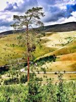 Previja Zlatibor Chalet, Horské chaty - Zlatibor