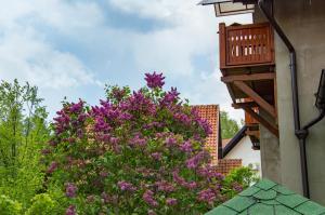 Apartments Josipovic, Appartamenti  Zlatibor - big - 44