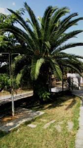 Villa Madeleine, Appartamenti  Nea Fokea - big - 37