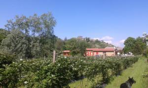Agriturismo Terra e Lago d'Iseo Franciacorta - AbcAlberghi.com