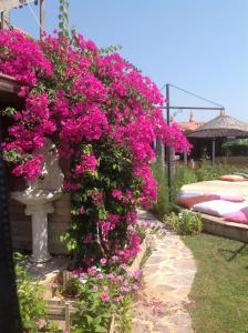 Bahaus Resort, Pensionen  Dalyan - big - 89