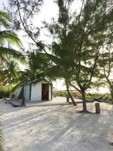 Rhincodon Typus, Hotels  Holbox Island - big - 26