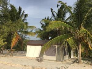 Rhincodon Typus, Hotels  Holbox Island - big - 25