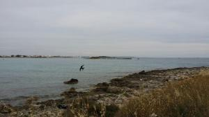Salsedine, Affittacamere  Porto Cesareo - big - 16