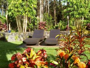 Volcano Mountain Retreat, Bed & Breakfast  Fern Acres - big - 24