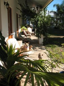 Elephant River Guest House, Guest houses  Clanwilliam - big - 2