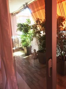 Monaco Studio