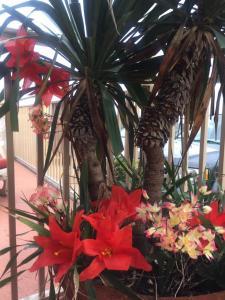 Waikiki Oceanfront Inn, Motely  Wildwood Crest - big - 31