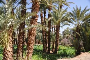 Kasbah Dar Daif, Bed and breakfasts  Ouarzazate - big - 147