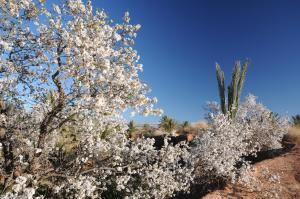 Kasbah Dar Daif, Bed and breakfasts  Ouarzazate - big - 110