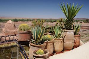 Kasbah Dar Daif, Bed and breakfasts  Ouarzazate - big - 67