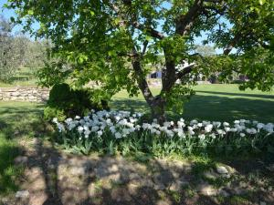 Fiore I, Appartamenti  Modigliana - big - 2