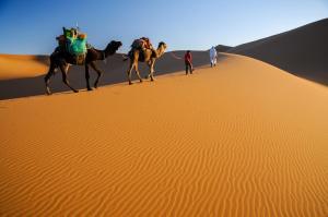 Kasbah Dar Daif, Bed and breakfasts  Ouarzazate - big - 88
