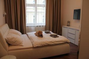 Apartman Belehradska, Apartments  Rybáře - big - 13