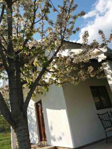 Vacation house Mileva
