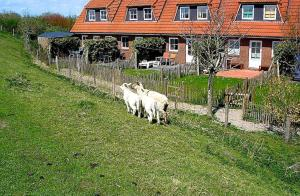 Landhaus-am-Deich-Wohnung-Moewe, Apartmány  Tönning - big - 23