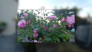 Valentise.  Foto 2