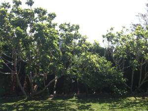 Rancho los transparentes, Prázdninové domy  Vejer de la Frontera - big - 4