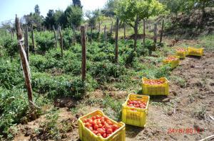 Tenuta Mauri - Agriturismo Vota
