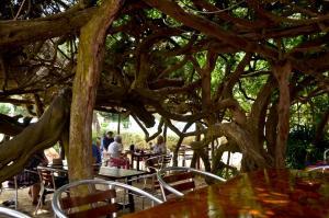 Hostal Alocs, Affittacamere  Playa d'Es Figueral - big - 21