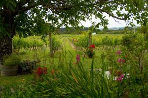 Margrain Vineyard Villas, Hotel  Martinborough  - big - 36