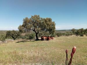 Herdade Da Amendoeira, Affittacamere  Arraiolos - big - 47