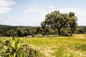 Herdade Da Amendoeira, Affittacamere  Arraiolos - big - 66