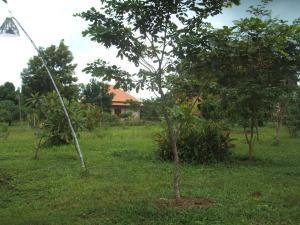 Green Plateau Lodge, Lodge  Banlung - big - 35