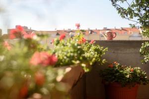 Basic apartman, Apartments  Zadar - big - 7