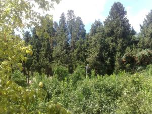 La Calabrisella, Bauernhöfe  Davoli - big - 58
