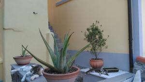 la stanzetta viola - AbcAlberghi.com